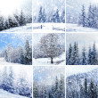 Beautiful winter collage with snow covered trees — Stock Photo