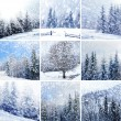 Beautiful winter collage with snow covered trees - Stock Photo