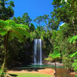 Tree fern and waterfall in tropical rain forest paradise - Stock Photo