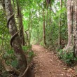 Rain forest trail Tablelands Australia - Stok fotoğraf