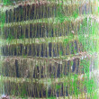 Palm tree trunk detail bark — Foto Stock
