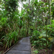 Stock Photo: Boardwalk in tropical rain forest
