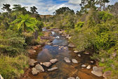 Creek and fern trees in Australian rain forest — Stock Photo