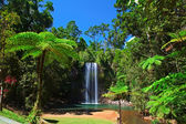 Tree fern and waterfall in tropical rain forest paradise — Stock Photo