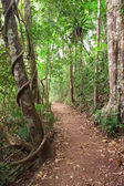 Rain forest trail Tablelands Australia — Stock Photo