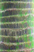 Palm tree trunk detail bark — Stock Photo