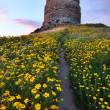 Spring flower field with trail to castle tower — ストック写真