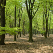 Panorama woods - Stock Photo