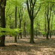 Panorama woods — Stock Photo