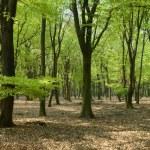Panorama woods — Stock Photo
