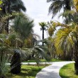 Постер, плакат: Palm trees alley