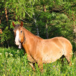 Stock Photo: Horse in forest