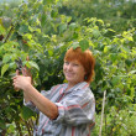 Gardening woman — Stock Photo #7576917