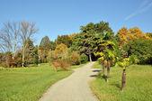 Autumn in Sochi Arboretum — Stock Photo