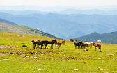 Summer mountains landscape with herd of horses — Stock Photo