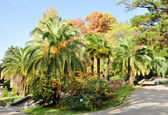 Palm-trees in a park — Stock Photo