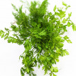 Royalty-Free Stock Photo: Dill and parsley are shown in the picture.