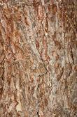Texturerat barken av tall, phu kradueng nationalpark, thailand — Stockfoto