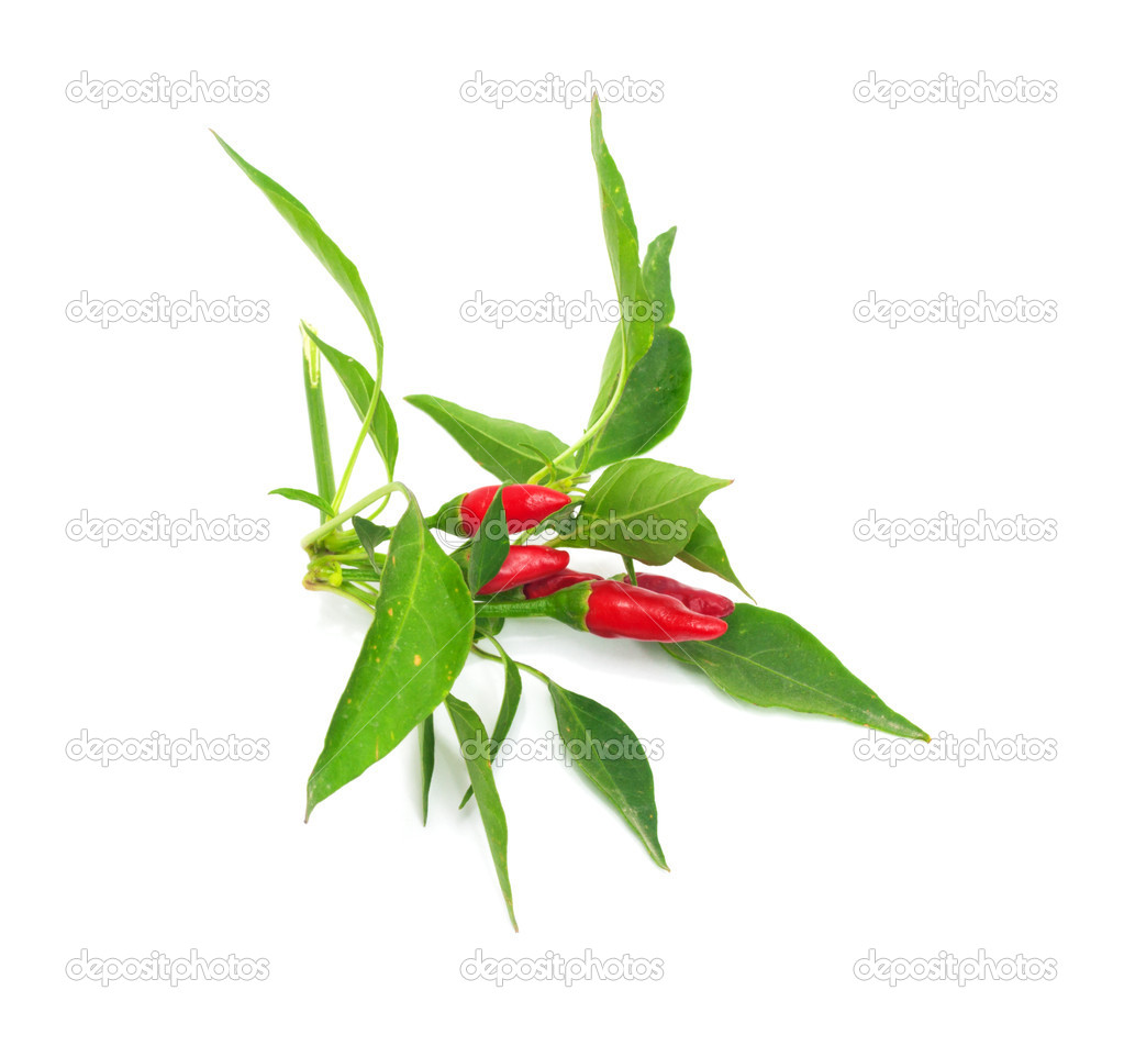 Little red hot Hawaiian Chile Peppers   Stock Photo #6863781