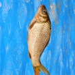 Carp on background of water — Stock Photo