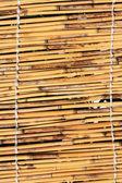 甘蔗纹理 — 图库照片