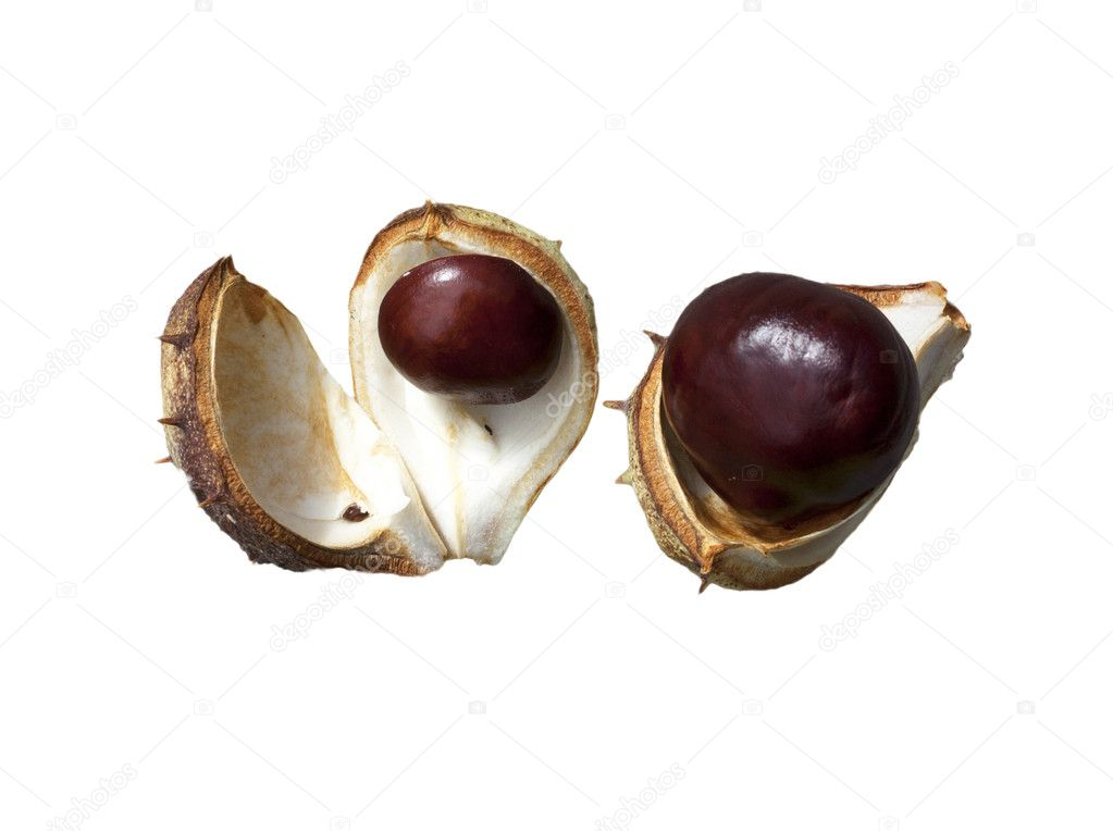Split in half prickly fruit of the horse chestnut  — Stock Photo #7481005