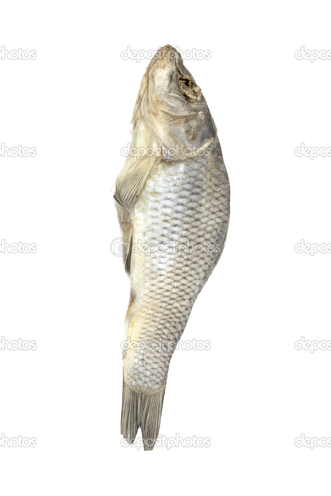 Dried fish allocated on a white background   Stock Photo #7502271