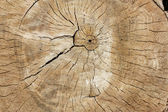 Anillos de árboles — Foto de Stock