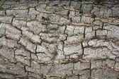 Bark texture. — Stock Photo