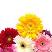 Colorful gerberas isolated on white — Stock Photo