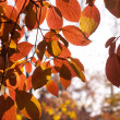 Fall leaves - Stok fotoraf