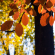 Fall leaves — Lizenzfreies Foto