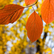 Fall leaves — Foto Stock