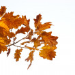 Fall leaves - 