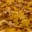 Fall leaves - Foto Stock