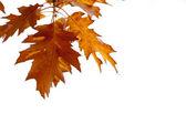 Podzim listí — Stock fotografie
