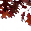 Fall leaves — Stockfoto