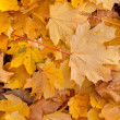 Fall leaves — Foto de stock #7628792