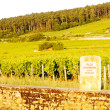 Grand cru vineyard of Mazis-Chambertin, Cote de Nuits, Burgundy, - Stock Photo
