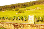 Grand cru vineyard of Mazis-Chambertin, Cote de Nuits, Burgundy, — Stock Photo