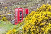 Telephone booth and letter box — Stock Photo