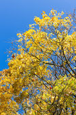 Close up of autumnal tree — Stock Photo