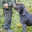 Stock Photo: Hunter with dog at hunt