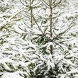 winter bomen — Stockfoto #6846397
