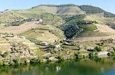 Douro Valley, Portugal — Stock Photo