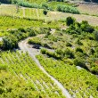 Stock Photo: Vineyars in Languedoc-Roussillon, France