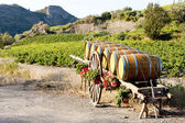 Vineyard with barrels, France — Stock Photo