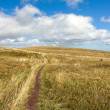 Pathway on meadow — Stock Photo #6839043