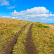 Stock Photo: Path on mountain meadow
