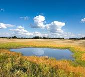 在草原的小湖 — 图库照片